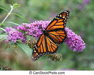 Motýl a divoké květiny