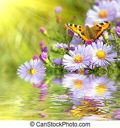 motýl, květiny, odraz, dva