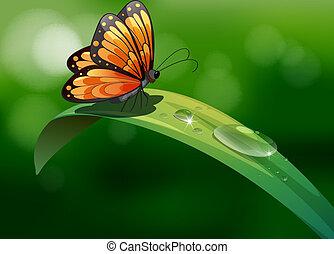 motýl, zředit vodou poslat řádku, list, přes