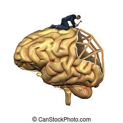 mozek, rekonstrukce