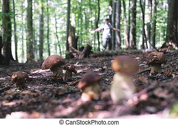 Muž sbírá houby
