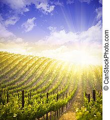 Nádherné víno a dramatické nebe