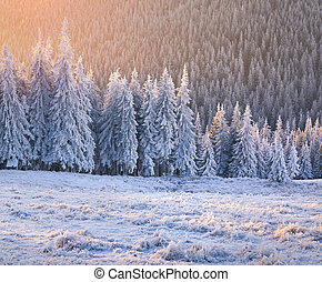 Nádherné zimní slunce v lese.