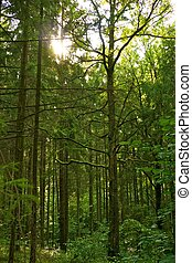 Nádherný les.