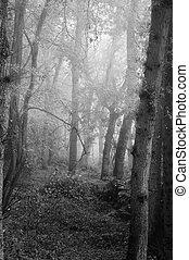 Nádherný podzimní úroda, lesová krajina