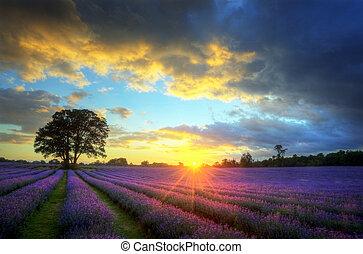 Nádherný pohled na slunce s atmosférickými oblačnostmi a oblohou nad vibrým polem, ztrhlými levandulovými poli v anglické krajině