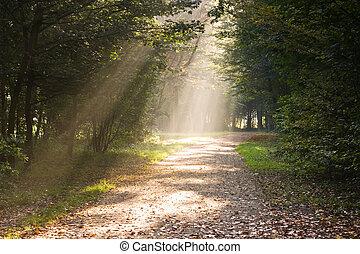 Na cestě jsou sluneční paprsky