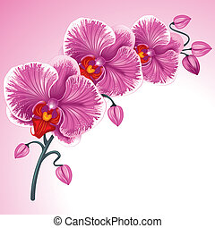 nach, orchidea