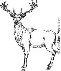 nahý, jelen, rukopis