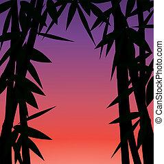 nebo, západ slunce, východ slunce, bamboo les