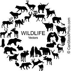 neobvyklý, živočichy, vybírání, silhouettes, divoký, druh