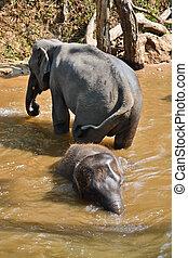 nothern, asie, slon, koupáč, thajsko, řeka