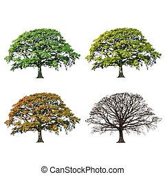 Oak tree abstrakt 4 sezony