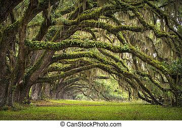 Oaks avenue Charlestonská stánka systémová, lesová krajina, lesová krajina, která se vaří v jižním pobřeží