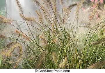 opeřit, mlha, nezkušený, den, pastvina