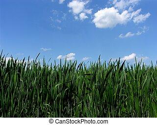 oplzlý lakovat koho, tráva, nebe, čerstvý