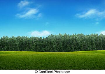 oplzlý podnebí, mládě, krajina, mladický les