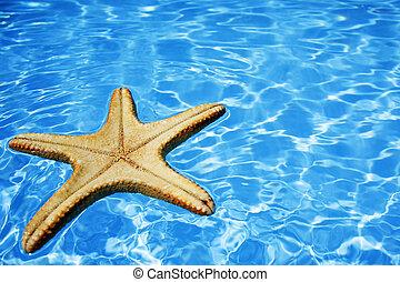 oplzlý zředit vodou, hvězdice