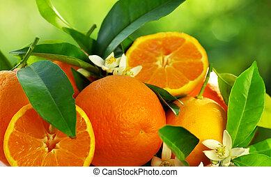 Oranžové ovoce a květiny