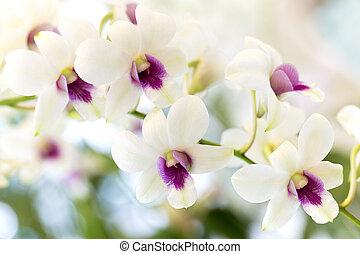 orchidea, čerň, běloba grafické pozadí