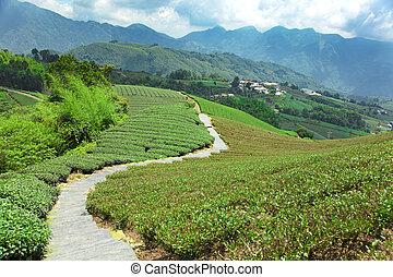 osada, čaj, údolí, .taiwan.