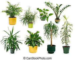 Osm různých indoorových rostlin v sadě