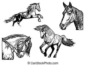 osvětlení, kůň