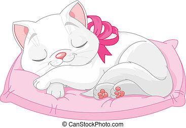 Pěkná bílá kočka