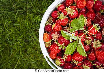 Pět čerstvé jahody na zelené trávě