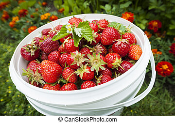 Pět jahod v zahradě