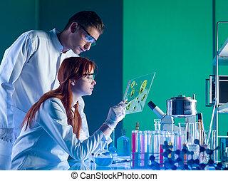 příklad, lékárnický, vědci, studovaní