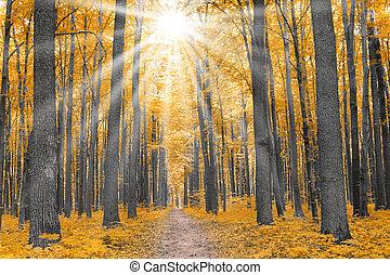 Příroda. Les na podzim