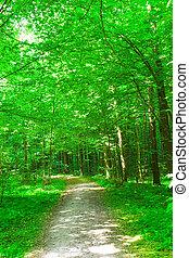 Příroda. Les v létě