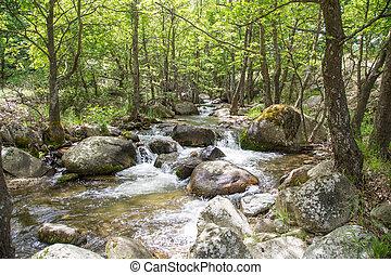 Přírodní krajina s stromy a řekou