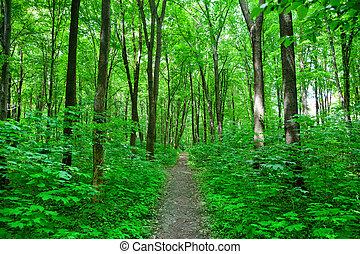 Přírodní les