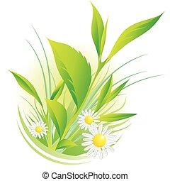Přírodní rostliny a heřmánek