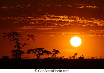 překrásný, afrika, západ slunce, safari