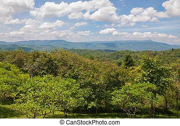 překrásný, hora, mladický krajina, kopyto