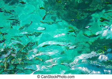 překrásný, konzervativní, thajsko, fish, asie, moře, jih