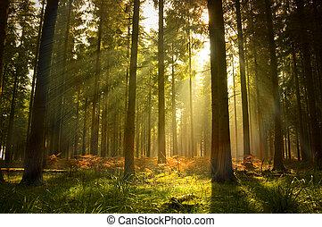 překrásný, les