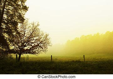 překrásný, mlha, krajina