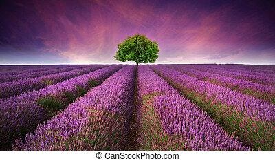 Překrásný obraz levandulového pole, západně slunce, s jedním stromem na obzoru, na rozdílných barvách