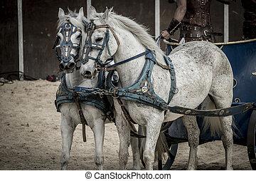 překrásný, vůz, gladiators, cirkus, boj, římský, mrskat, krvavý