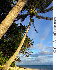 Palm strom