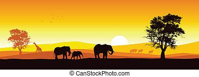 panoráma, safari