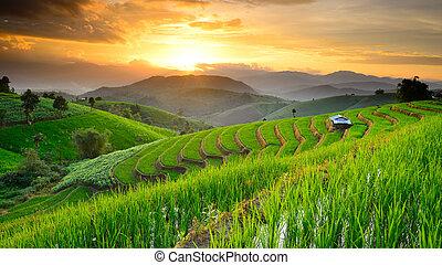 papongpieng, chiangmai, uspořádat terasovitě, západ slunce, krajina, klatba, thajsko, rýže, pozadí