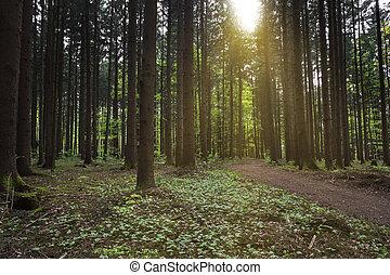 paprsek, bavorsko, slunit se, německo, les, selský