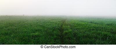 pastvina, mlha
