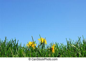 pastvina, nebe, grafické pozadí