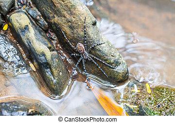 Pavouk na skále ve vodě